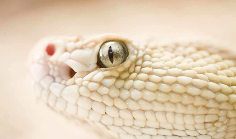 змея, просмотреть, змеи,