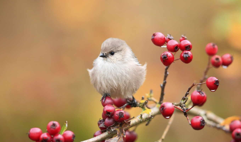 birds, cute, птица, branch, pinterest, desktop, птицы, ветви,