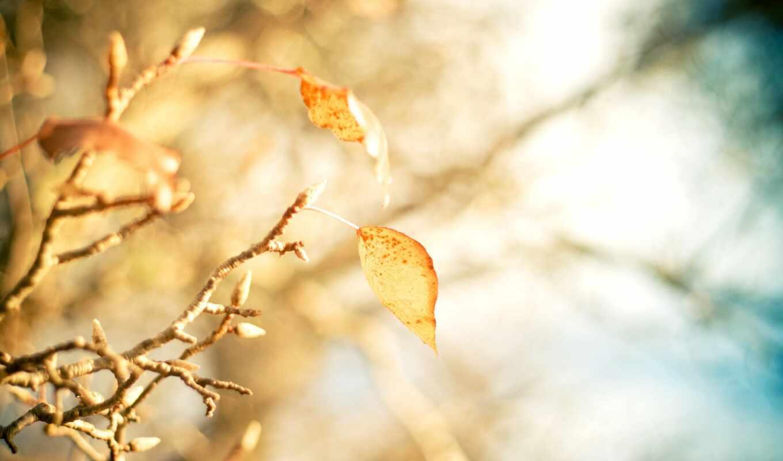 осень, makryi, дерево