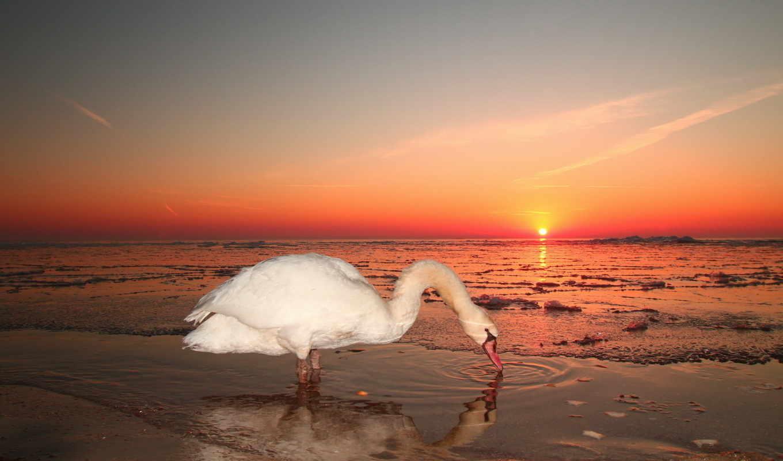 закате, белый, море, солнце, красное, волны, вечер, идёт,