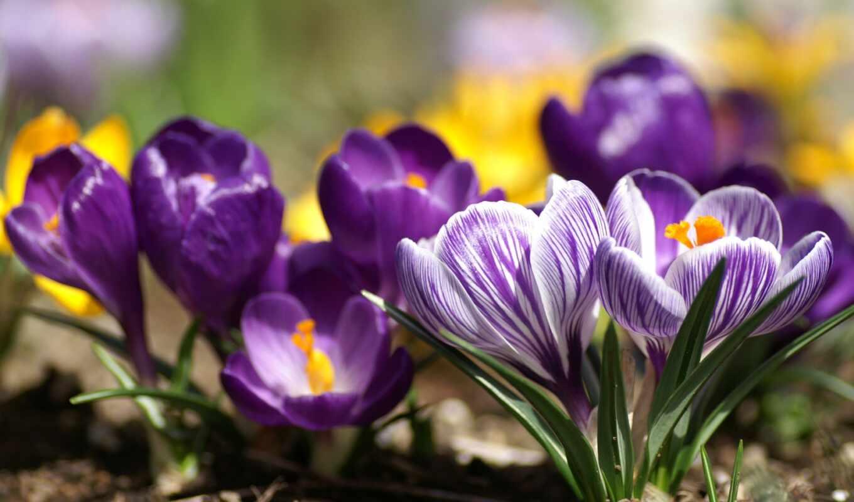 может, весна, весны, ранняя,