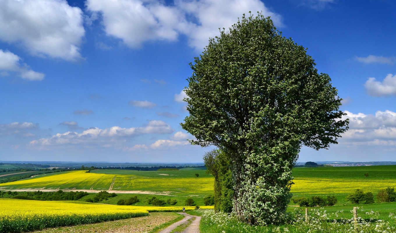 дерево, горы, разделе, красивые, природа, поля, одинокое, пейзажи -,