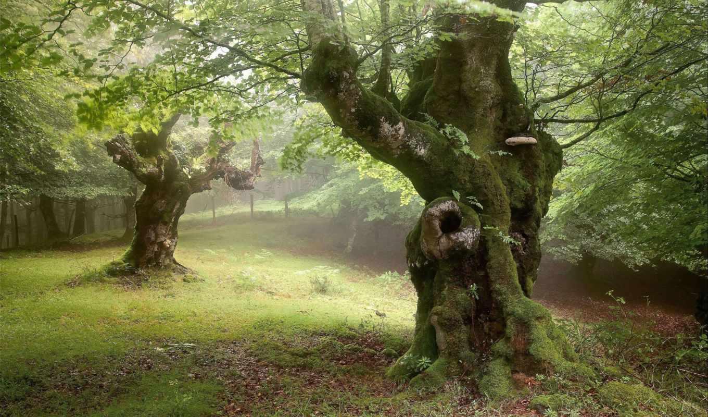 природа, только, iphone, images, дневник, paisajes, landscapes,
