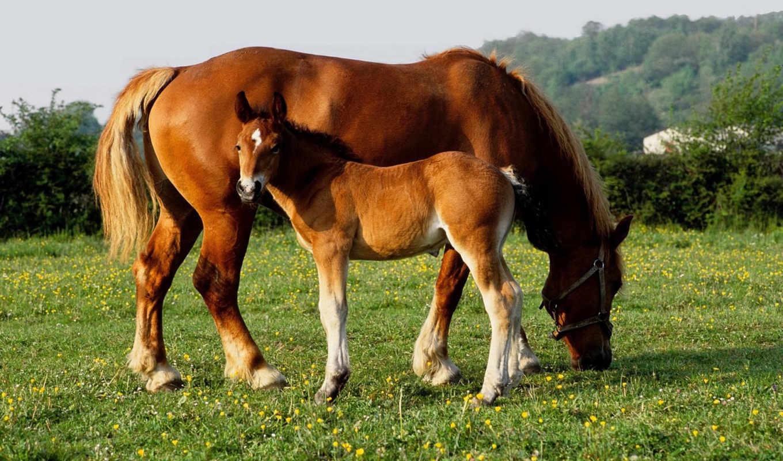 baby, animals, лошадь, horses, природа, images, детеныши, this, животных,