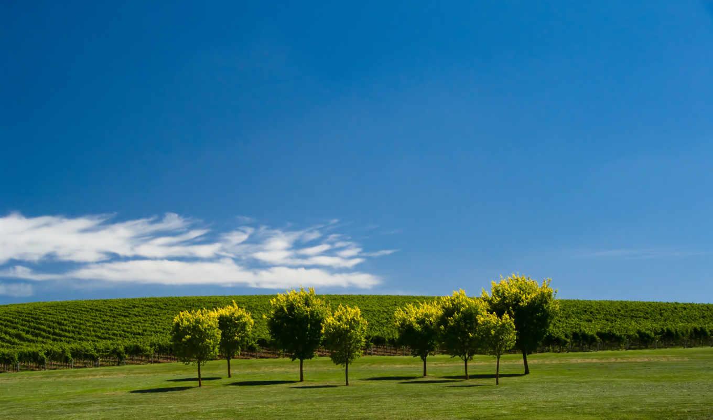 windows, full, зелёный, природа, трава, desktop,