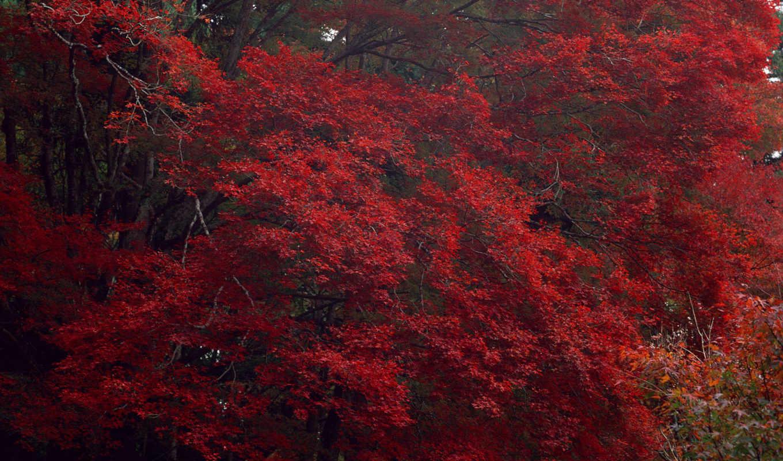 autumn, trees, manzaraları, orman, nature, resimleri, şelale, gifleri, image, hareketli,