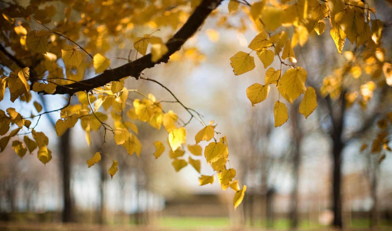 природа, осень, размытость, ветка, листья, дерево,