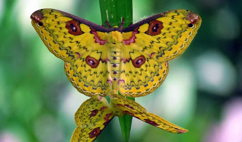 бабочки, kartinka, makro, травинка, насекомые, красивые, bugs, количество, коллекция,
