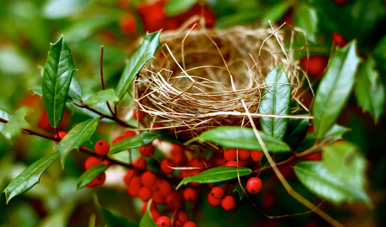 nest, праздники, шарики, easter,