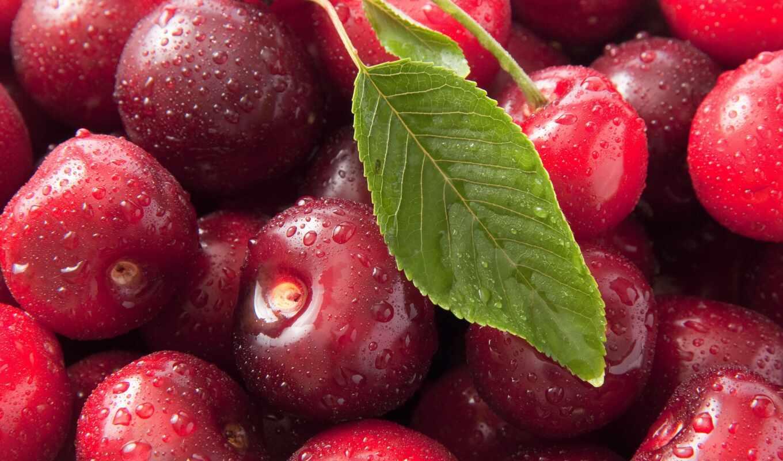 ,вишня,листок,ягода,