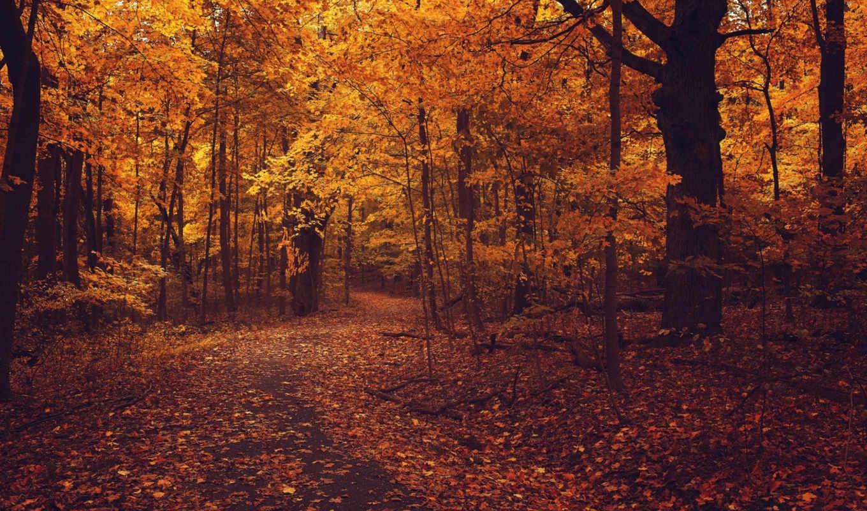 осень, листья, деревя, лес, листва, дорога,