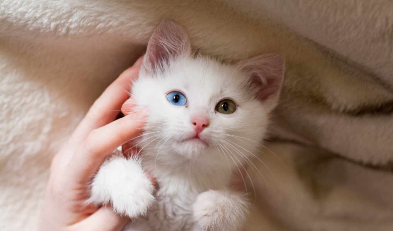 white, кот, desktop, cute, количество, котенок, images,