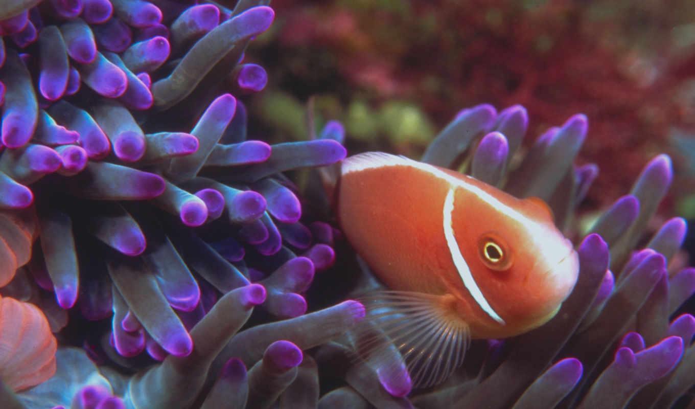 fish, ан, madison, дневник,