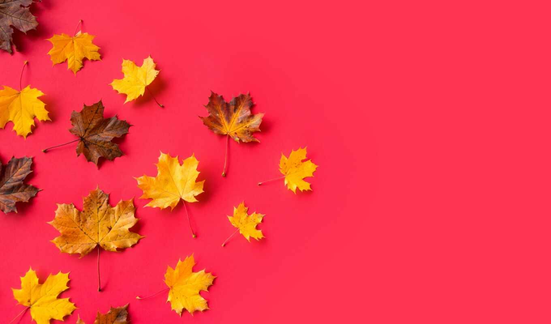 leaf, плоский, yellow, осень, maple, source, дерево, color, ff