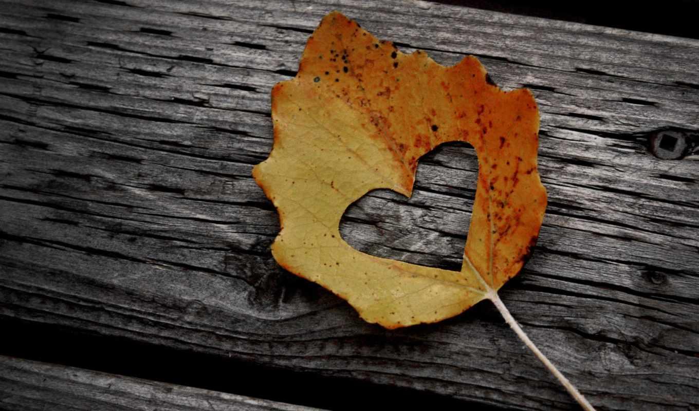 love, настроение, листья, листва, листочек, скамейка, листки, листок, autumn, сердце, leaf, kapak, cover,
