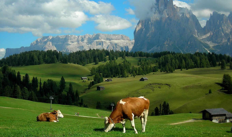 прекрасными, уголками, природы, альпы, луга, холмы, пейзаж, горы, коровы,