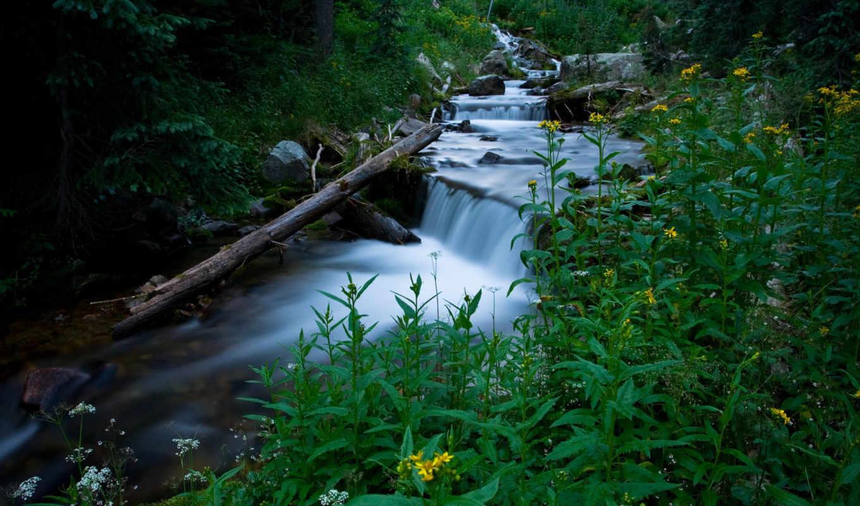 природа, инструкция, возможность, без, water, лес, поток, предоставляет,
