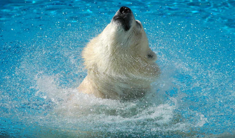 медведь, брызги, белый, вода, воде, животные, bear, белым, медведем, polar,