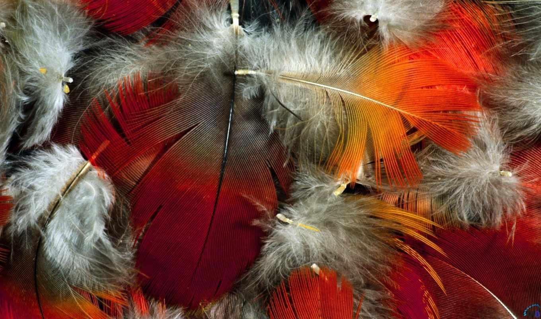 feathers, colorful, крыло, кб, перья,