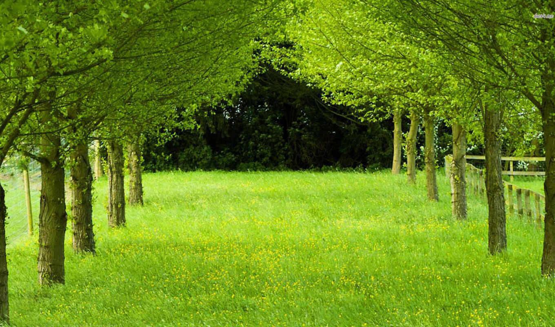 зелёный, трава, trees, фон, природа, дерево,