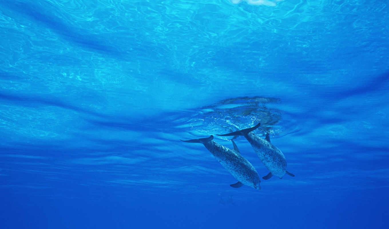 дельфины, zhivotnye, категория, море, world, которые,