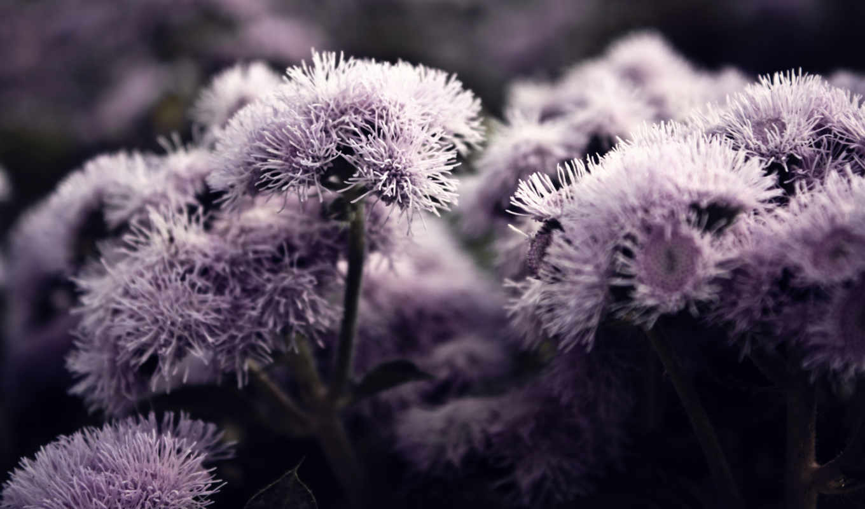 purplish,
