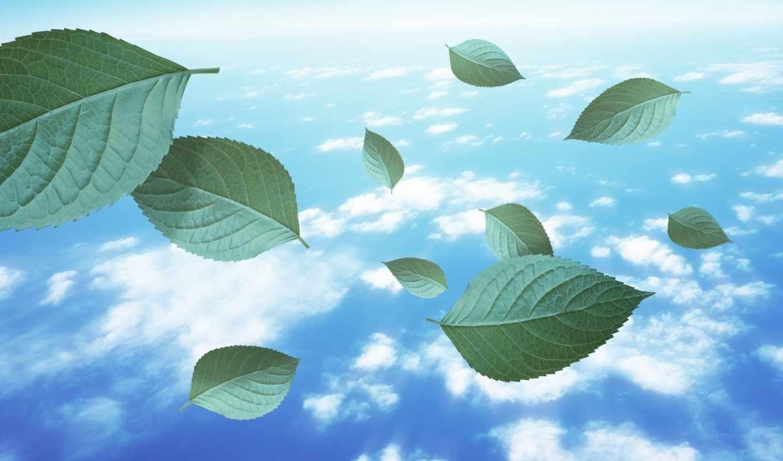 green, vista, nature, olsaydım, bir, reflexiones, leaves, torrent, click, free, тьвжкягщурэм, resimler, yaprak, зелибоэмыљъєзжрр, ехзжбцтъ, cristianas, votos,