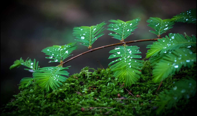 категория, капли, росы, совершенно, природа,