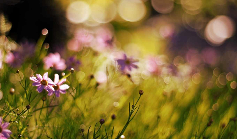 боке, effect, цветы, фотографии, размытость, природа,