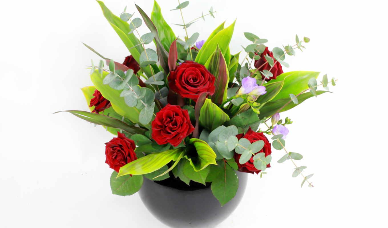 цветы, заставки, фотографии, красивые, качественные, кактус,