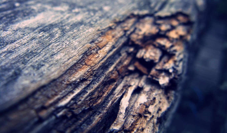 без, регистрации, дерево, log, спил,