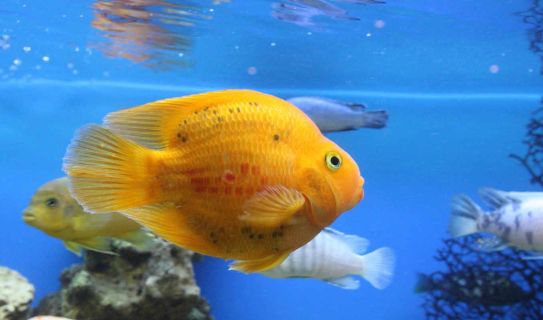 fish, рыбки, waters, рыб, аквариуме, аквариумные, рыбками,