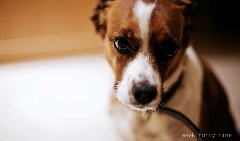 собака, фотообоев, чудесных, собаками, кот, взгляд,