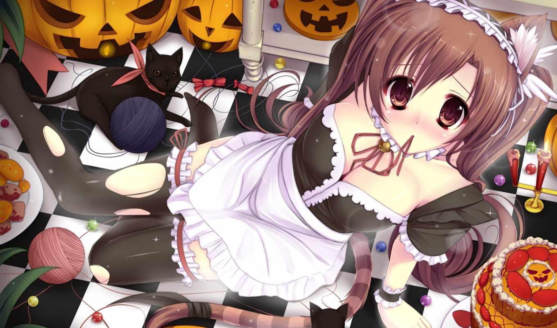 anime, ушки, девушка, горничная, кот, грудь, кошка, kawaii, тыква,