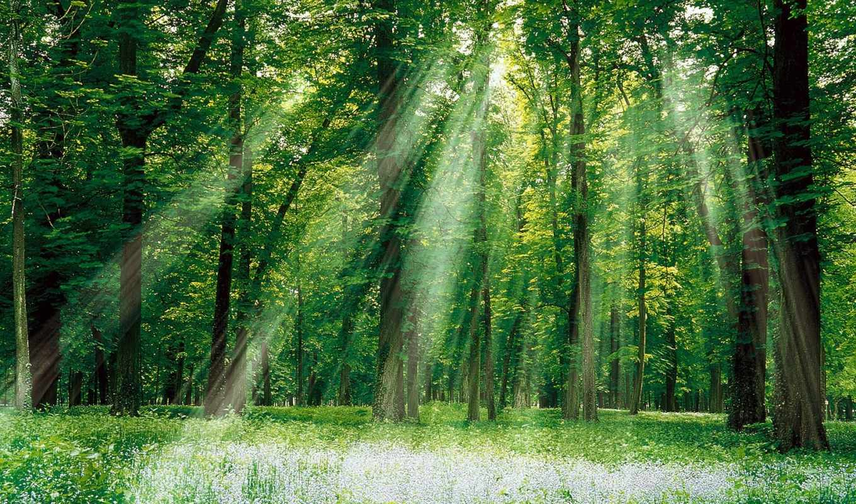деревья, деревьев, растительность, имеют, garden,
