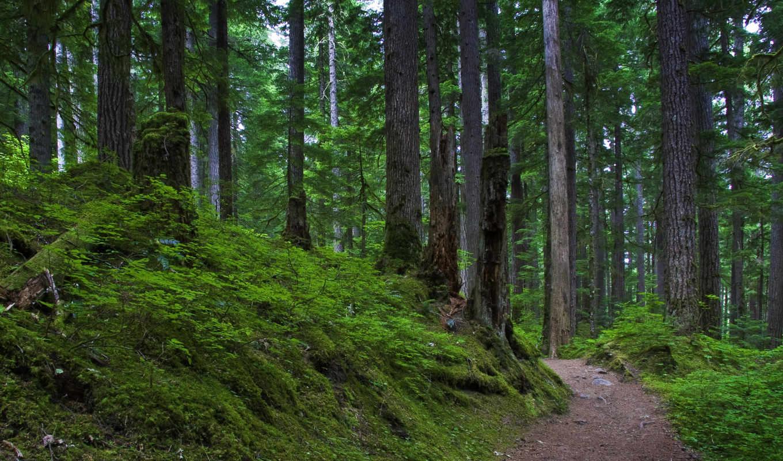 widescreen, free, лес,