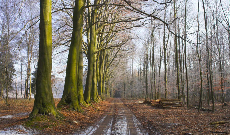 первый, осень,, снег, деревья, path, трава, лес, земля, road, осенью, брёвна, утро, paisajes, туман, свежесть,, природа,
