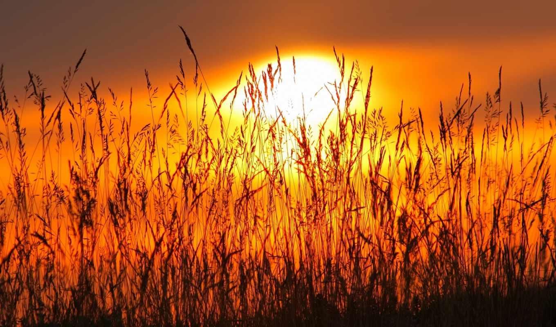 canon, flickr, трава, kitlens, sun, закат, washington, пляж, растение, photos,