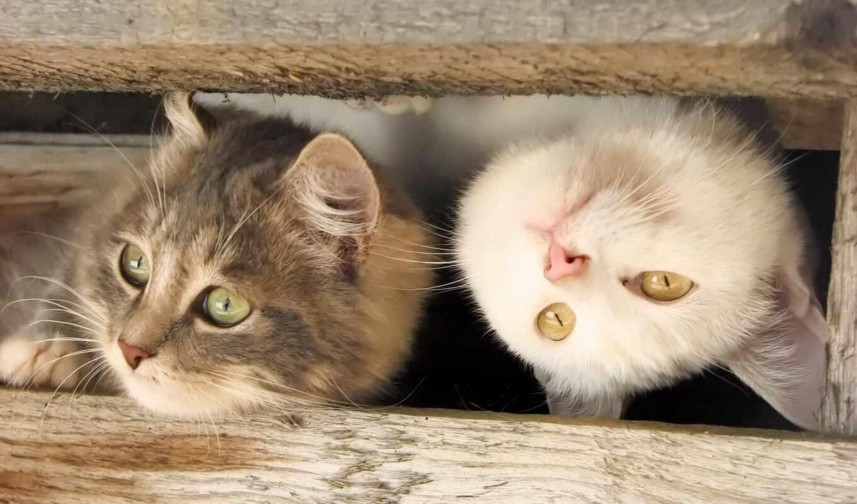 кот, котенок, кошки, cats,