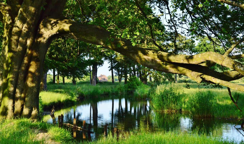 трава, природа, деревя, река, пруд,