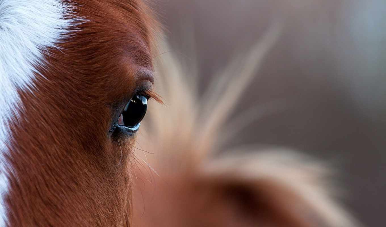 лошадь, свет,