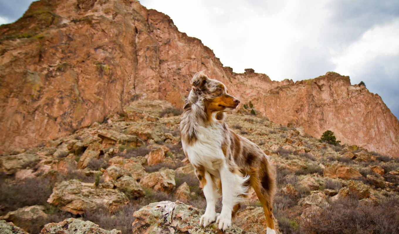 собака, dogs, animal, гора, animals, фон, desktop, trail,
