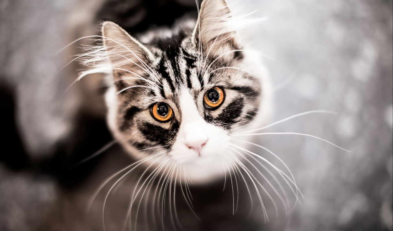 кошки, кот, взгляд, сверху, ус, морда, очень, забор, кошке,