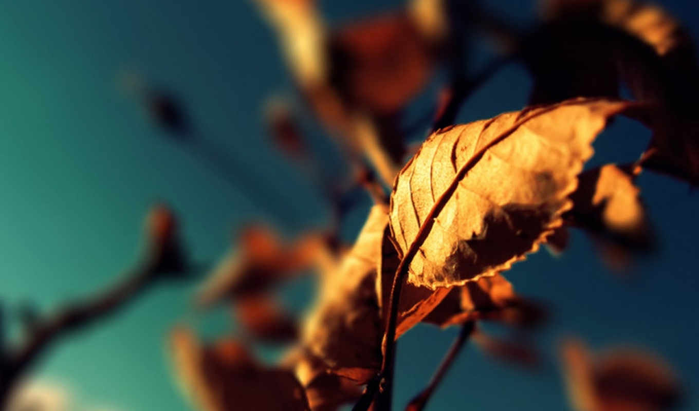 leaves, iphone, осень, twitter, небо, макро, ветки, download, beta, sit, release, разрешением, лист, nulla, dictum, libero, одним, adaptive, файлом, like, full, dry, rainmeter,