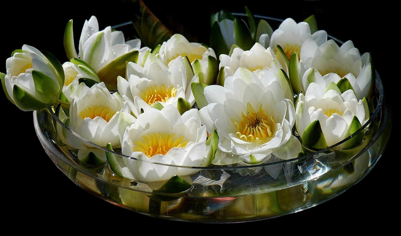 букет, ваза, цветы, water, lily, lotus, картинка,
