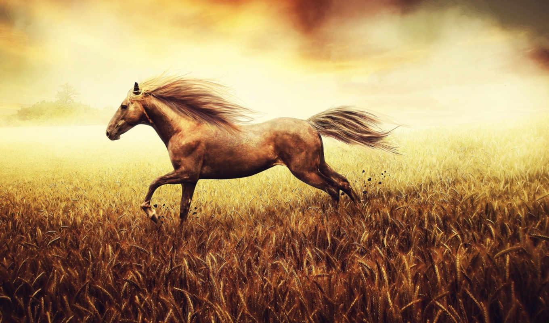 лошади, год, лошадь, run, zhivotnye,