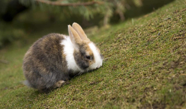 кролик, трава, кролики, телефон, zhivotnye, крольчонок,