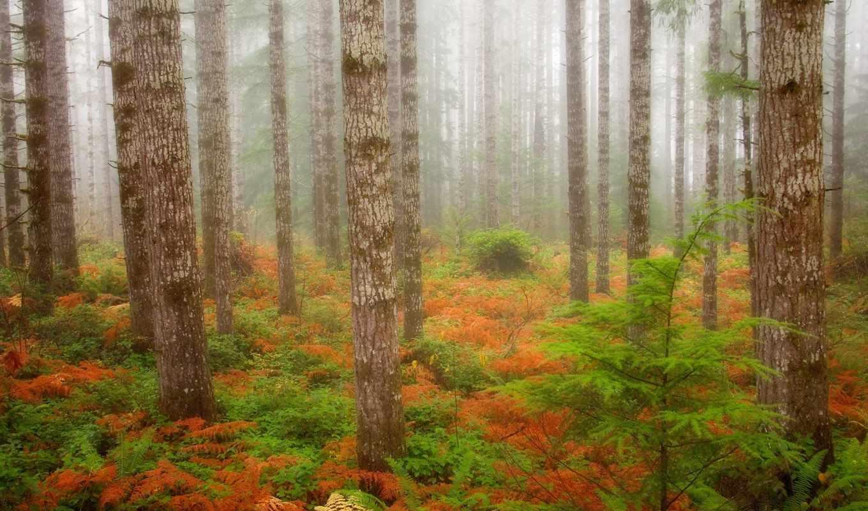 лес, анимации, природа, красивые, анимационные, gif, red, коллекция,