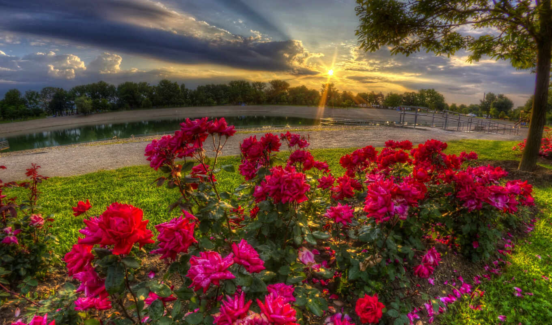 пина, утро, картинка, pinterest, luchit, доска, цветы, sun