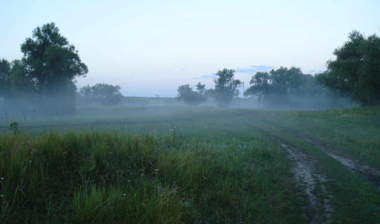 природа, туман, дорога,